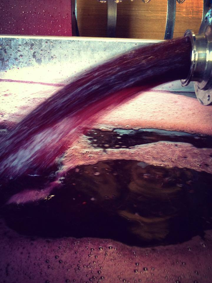 Harvest 2014 - Pinot Noir off the Press