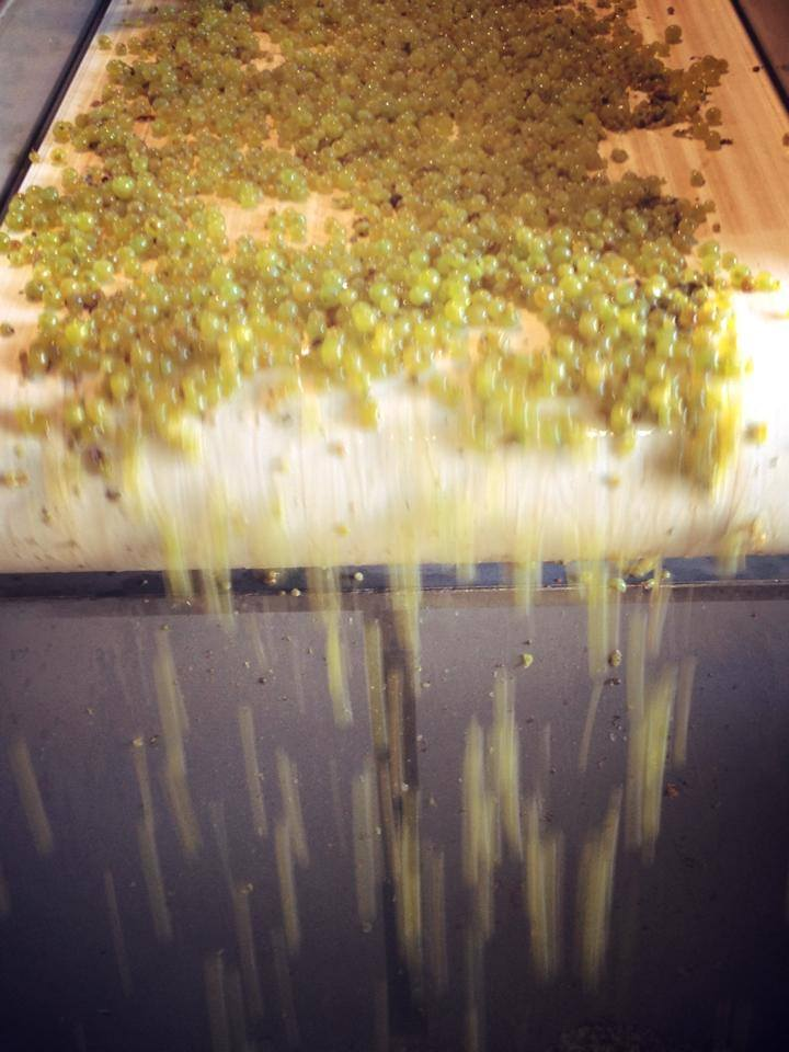 Harvest 2014 Durell Vineyard Chardonnay