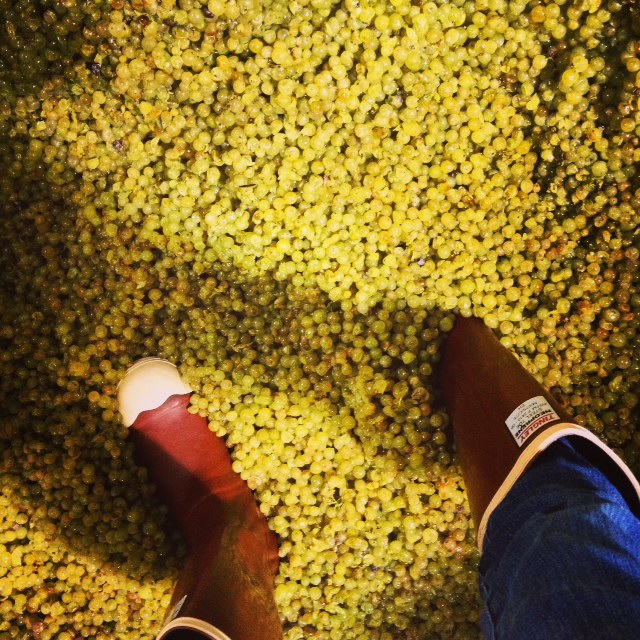 Harvest 2014 - and we're not afraid to step right in!